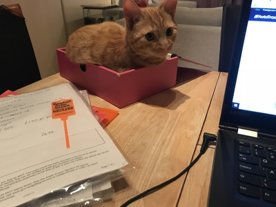 My cat Chewy helping/Hindering with paperwork